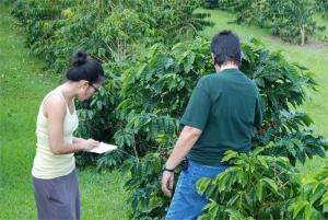 Hilo Coffee Mill4